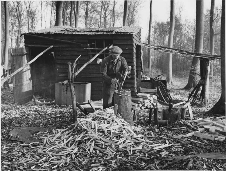 Bodger in Hampden Woods